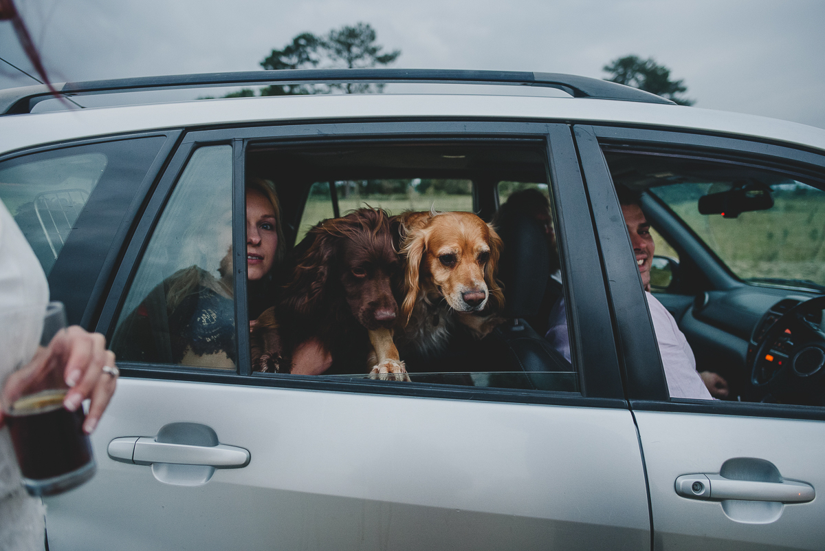 dogs in a car at a wedding